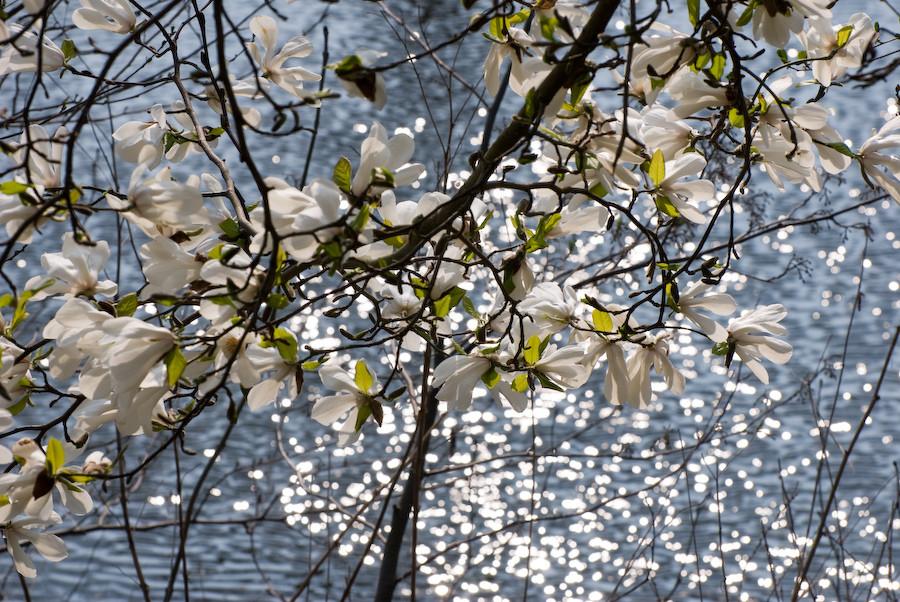 Frühlingsblüten im Gegenlicht