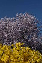 Frühlingsblüten02