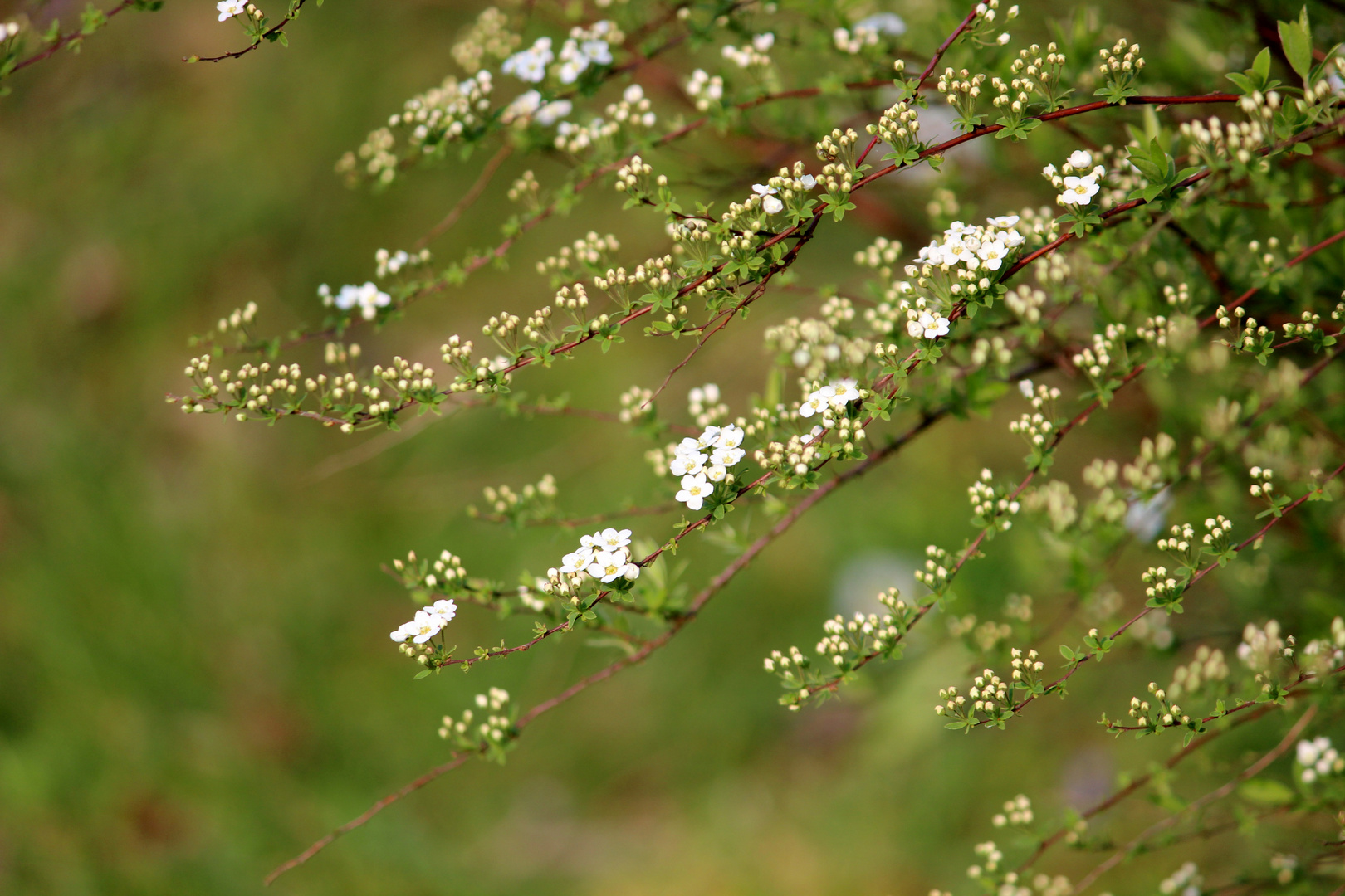 Frühlingsblütenperlenschnuren