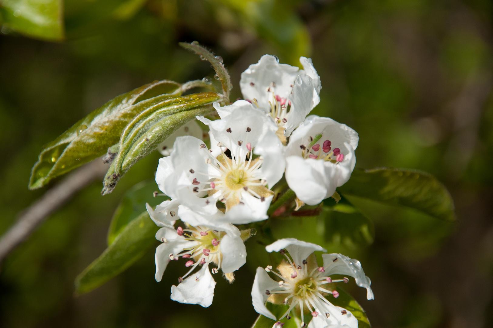 Frühlingsblütern