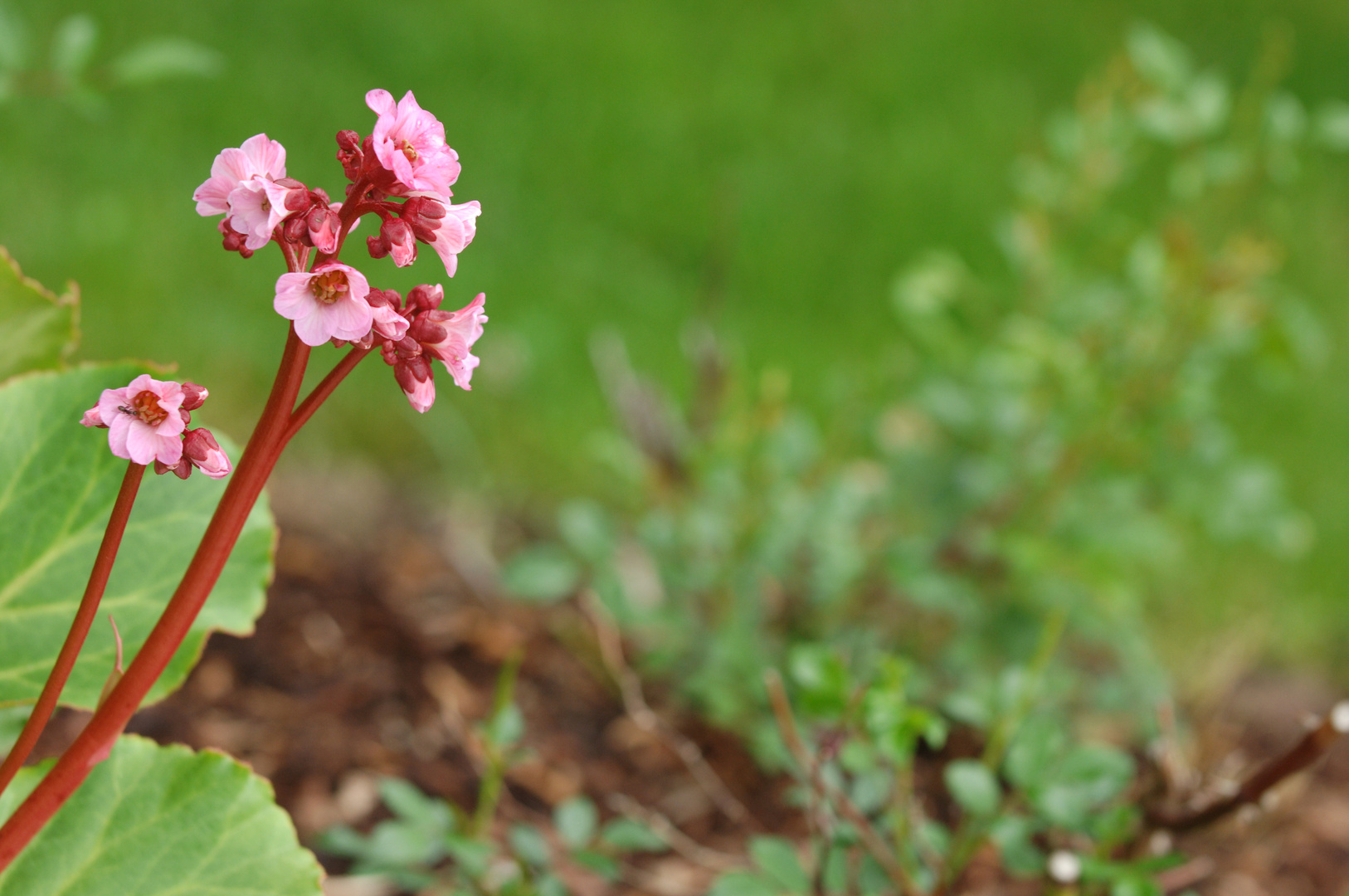 Frühlingsblume.