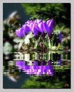 Frühlingsblumen am Teich