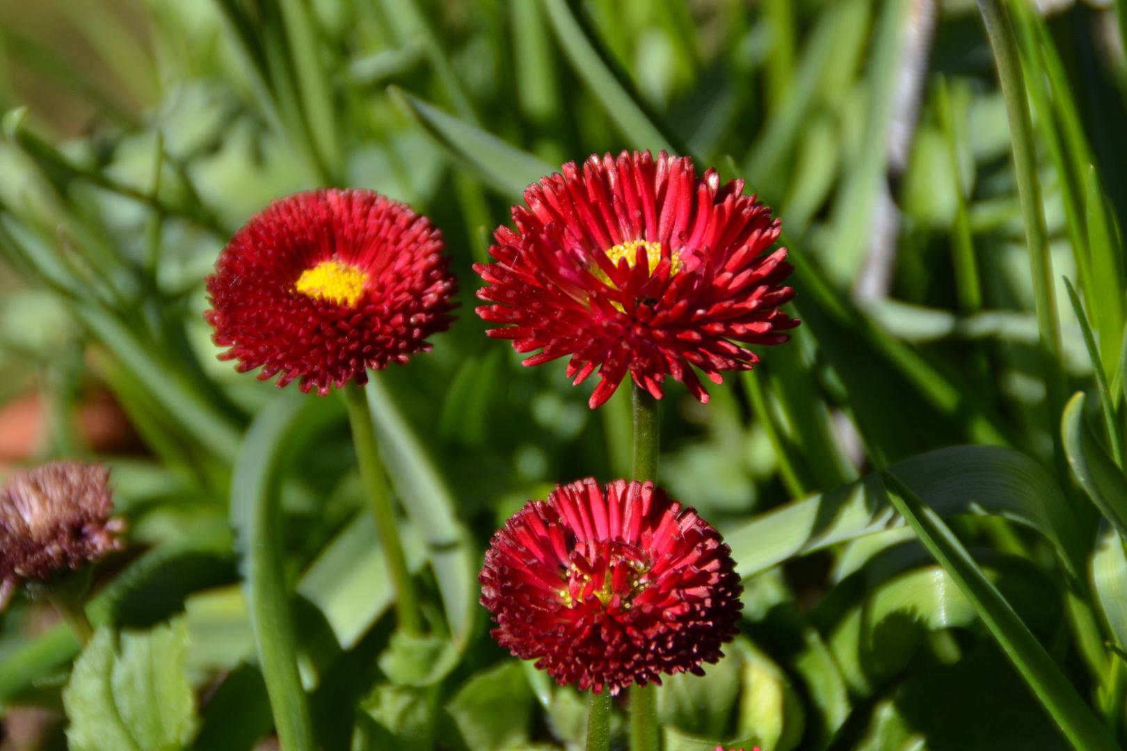 Frühlingsblumen III