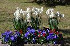 Frühlingsblumen V