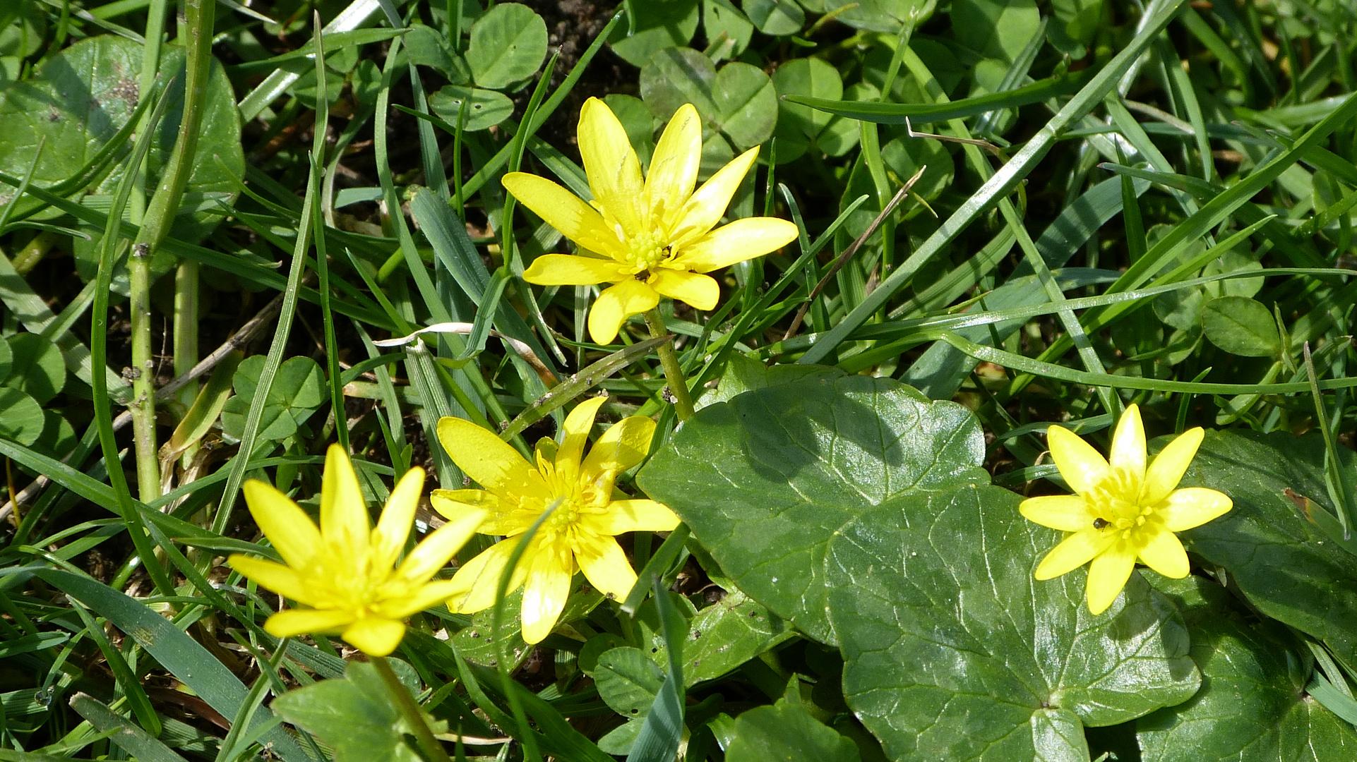 Frühlingsbote 4