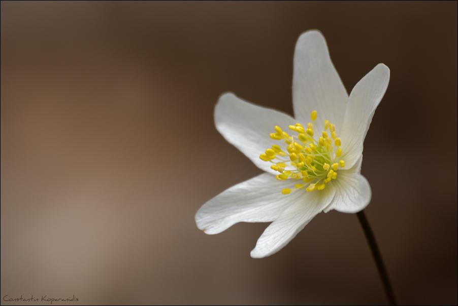 Frühlingsbote
