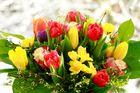 Frühlingsboten...