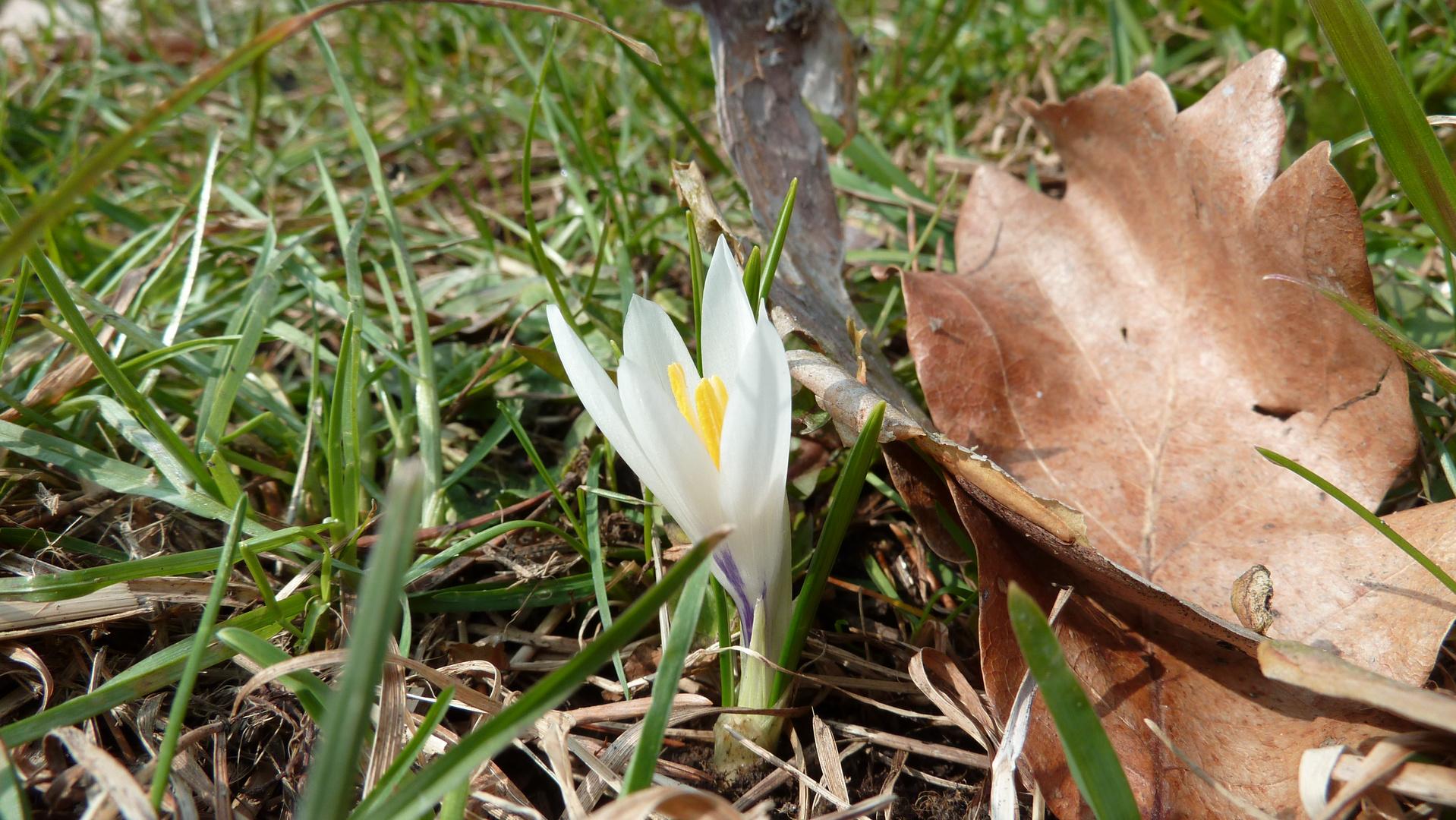 Frühlingsboten 1