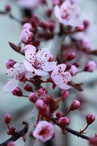 Frühlingsboten.....