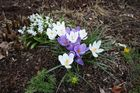 Frühlingsboten