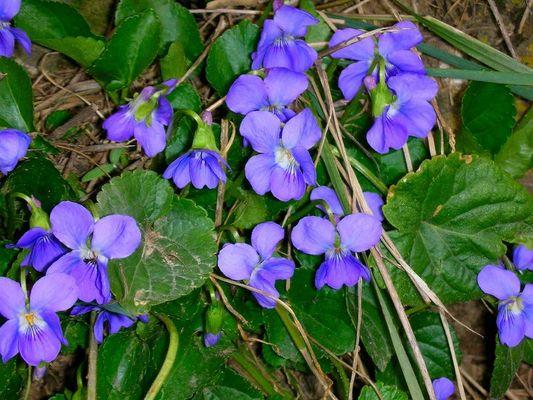 Frühlingsboten am 1. April