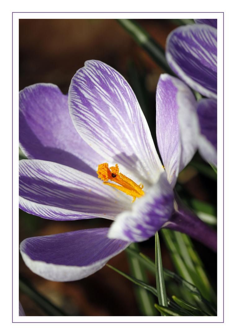Frühlingsboten II
