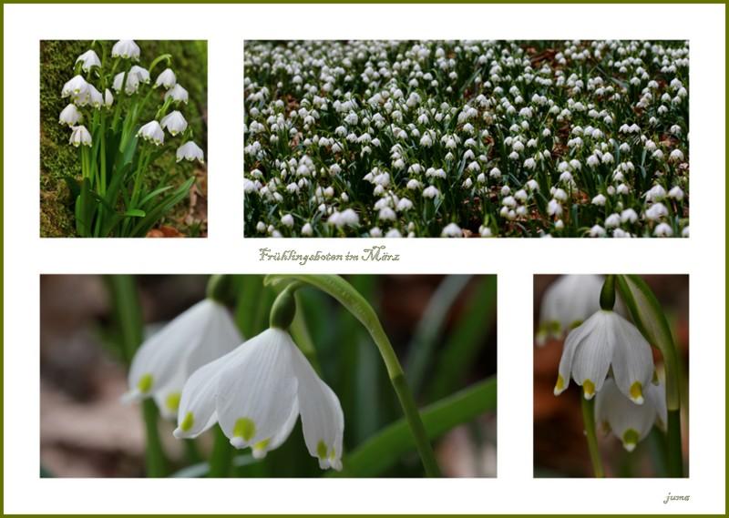 Frühlingsboten im März