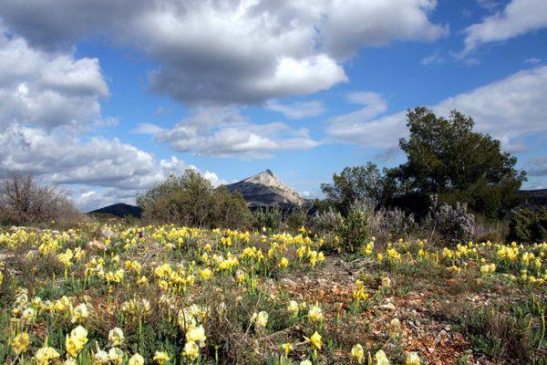 Frühlingsboten in der Provence
