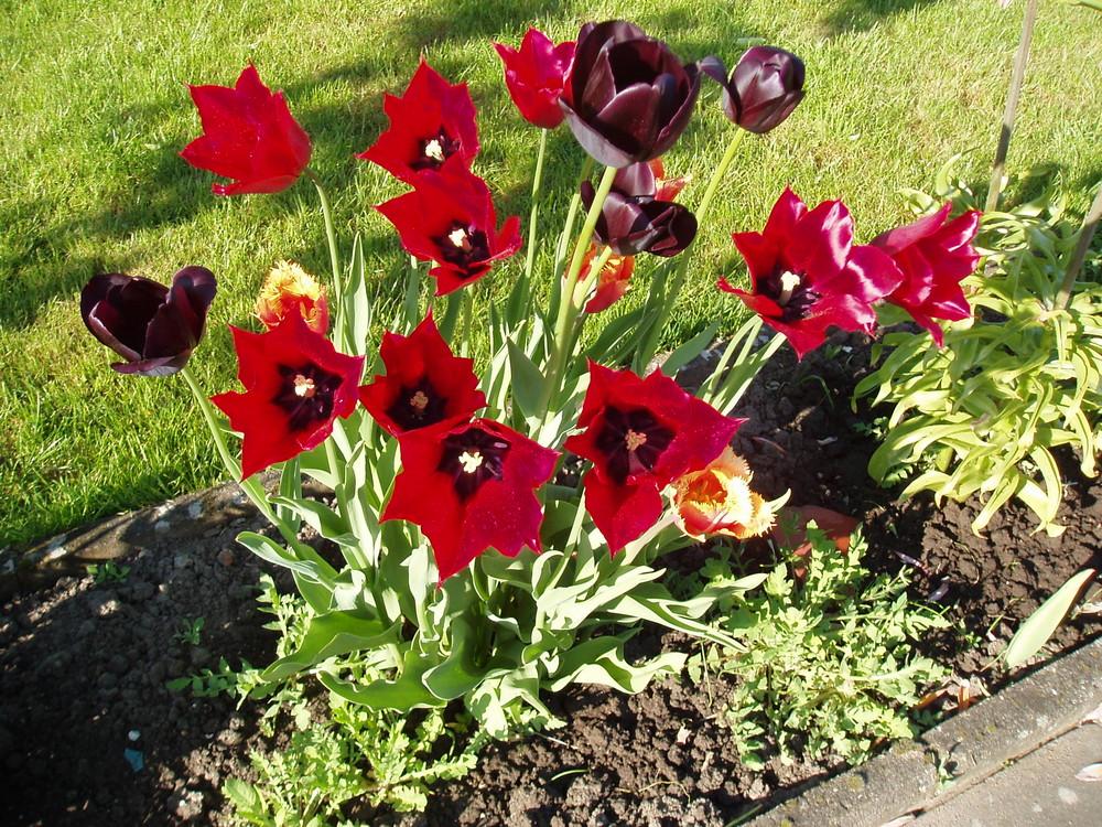 Frühlingsboten in der Sonne