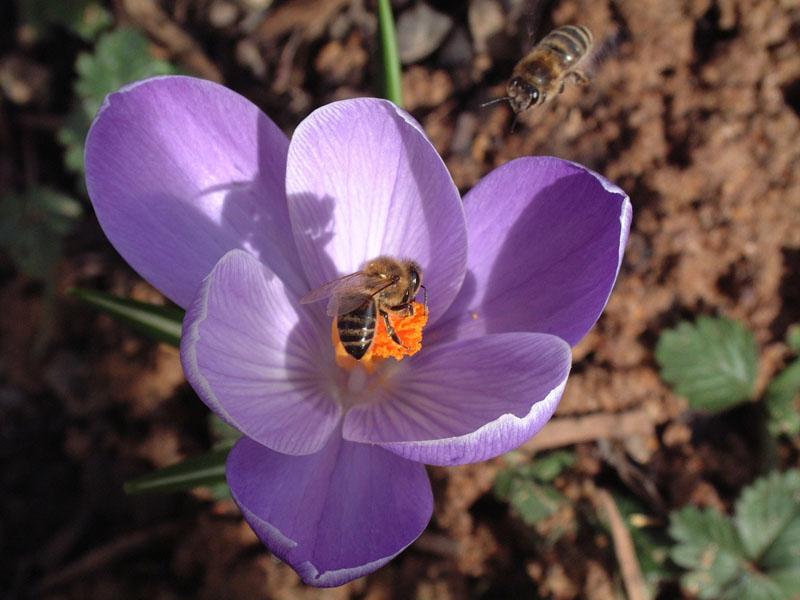 Frühlingsboten Teil 2
