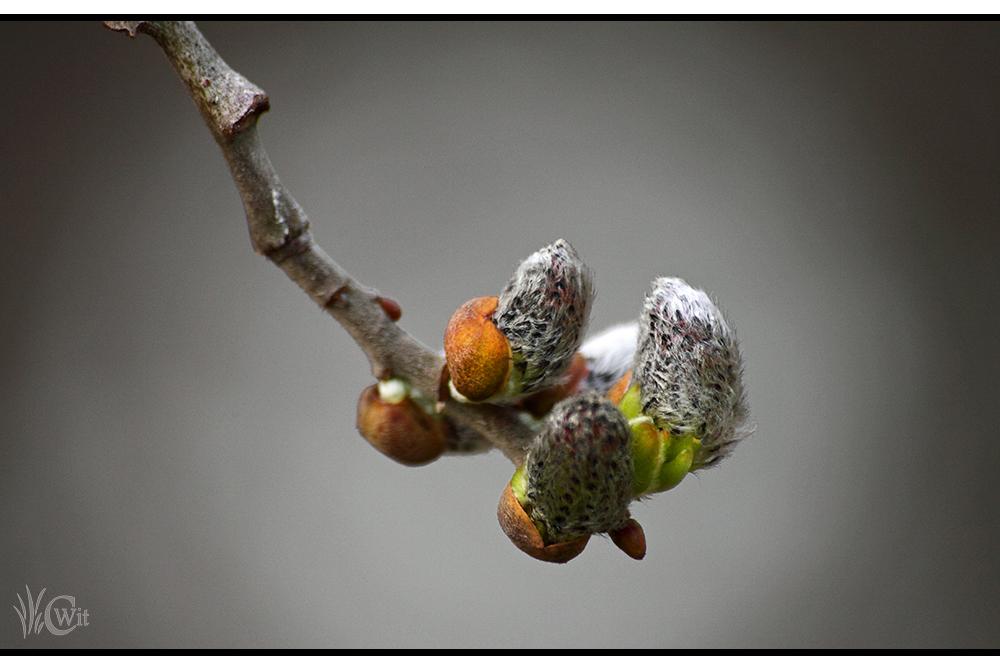 Frühlingsboten Wuschelpuschel