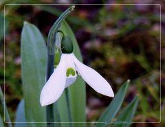 Frühlingsbotschaft