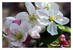 Frühlingsbraut