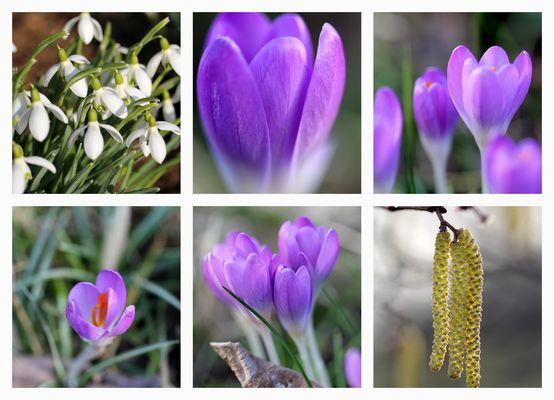 Frühlingscollage 2