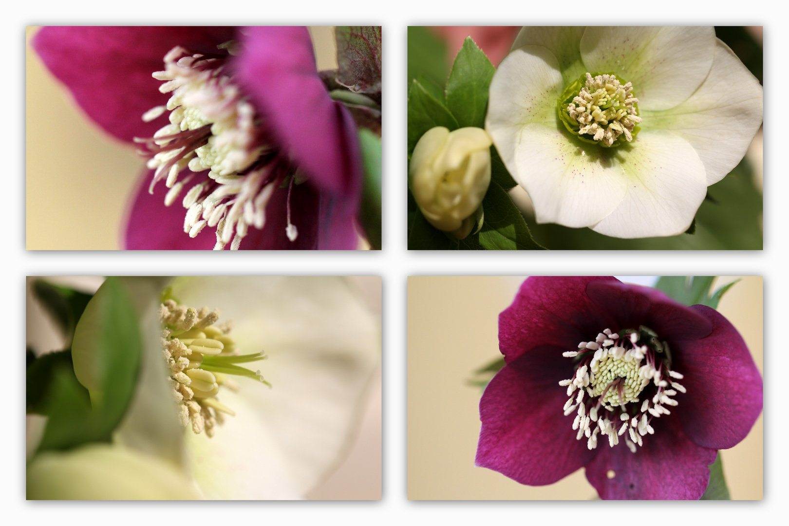 Frühlingscollage 3