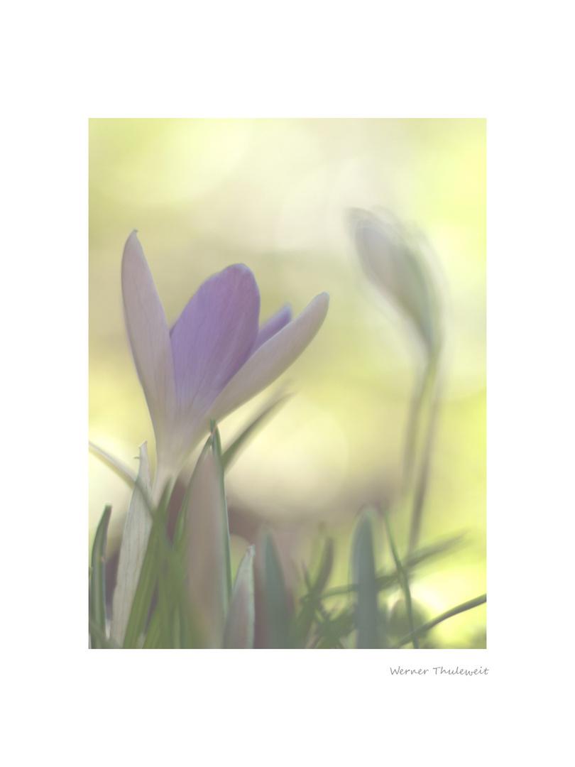 Frühlingsduett