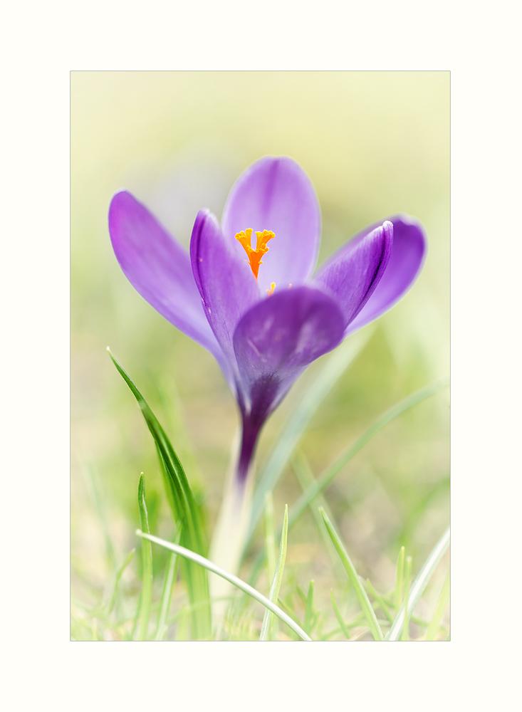 ...Frühlingsduft liegt in der Luft...