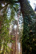 Frühlingseinbruch im Wald