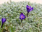 Frühlingserwachen