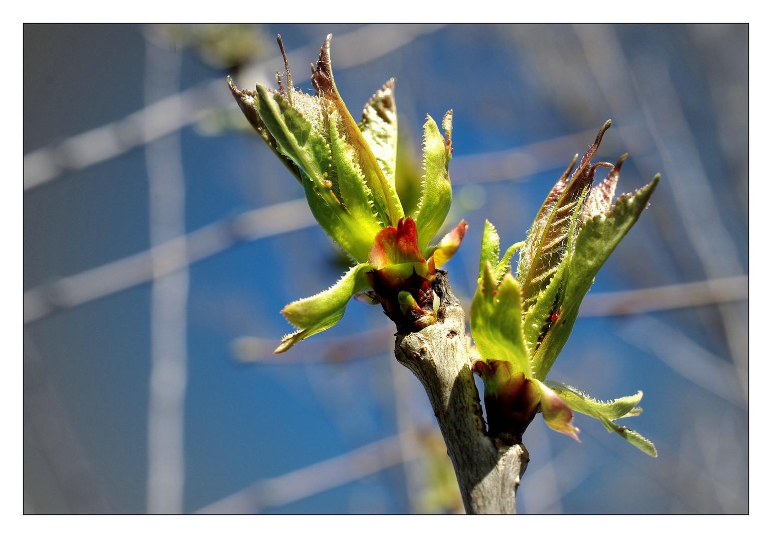 Frühlingserwachen ... (1)
