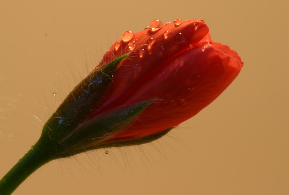Frühlingserwachen.............
