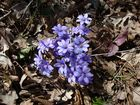 Frühlingserwachen 2