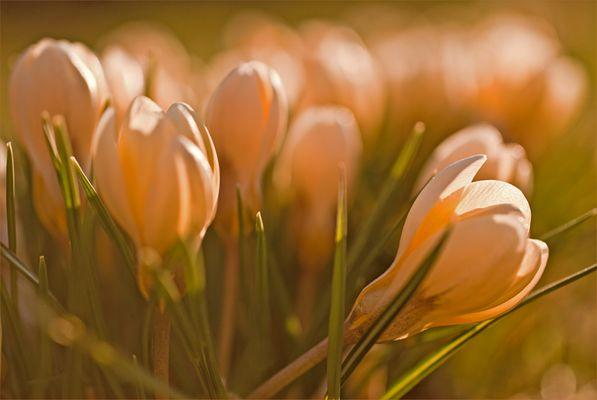 Frühlingserwachen (2)