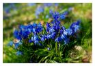 Frühlingserwachen ... (2)
