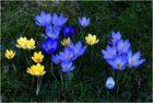Frühlingserwachen (6)