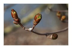 - Frühlingserwachen -