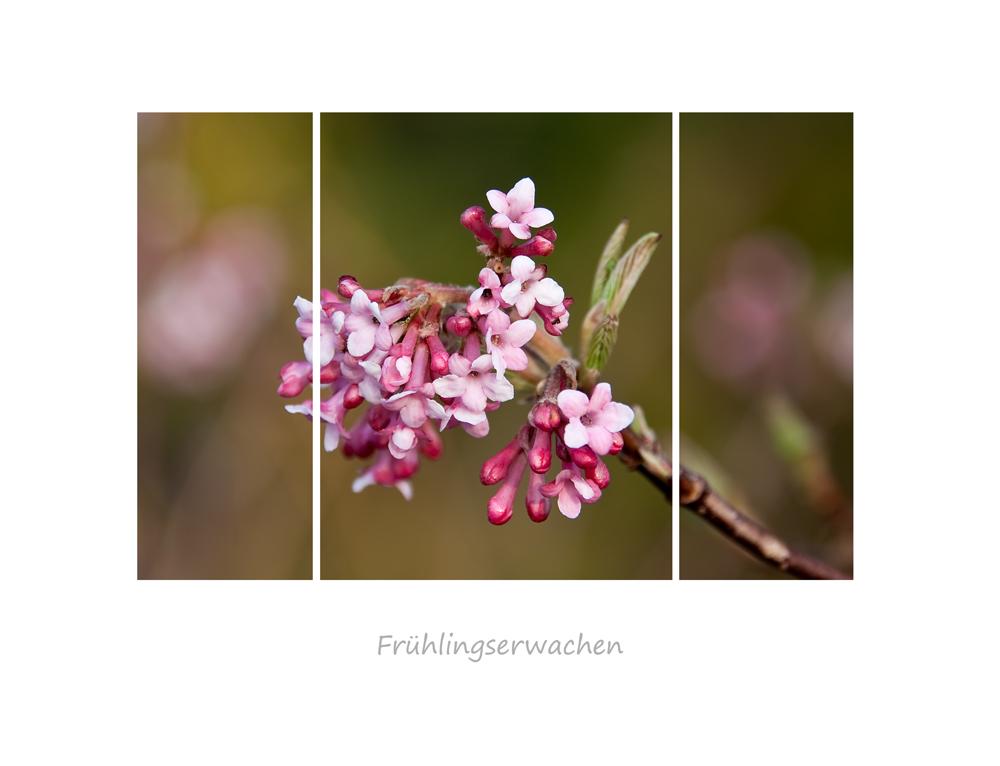 *Frühlingserwachen*