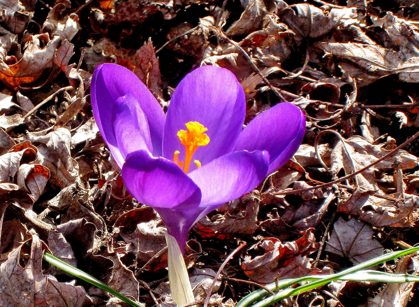 Frühlingserwachen ...