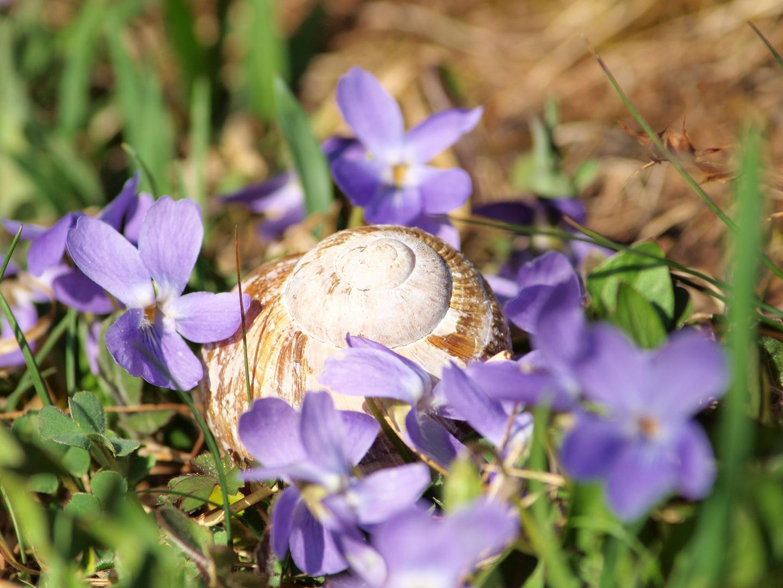 Frühlingserwachen am Kirschbaumhügel in Tegernsee 1.