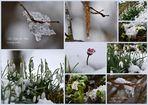 Frühlingserwachen bei Eis und Schnee