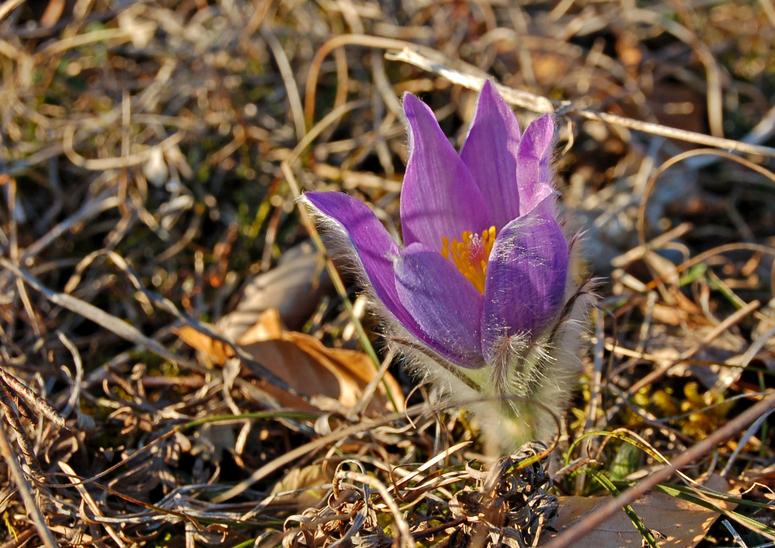 Frühlingserwachen,- bei uns schon dieses Jahr im Februar!