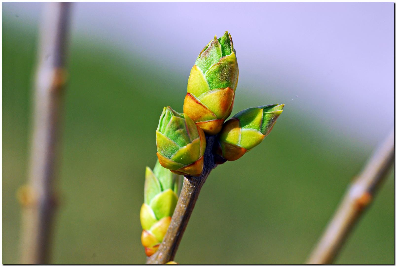 Frühlingserwachen C