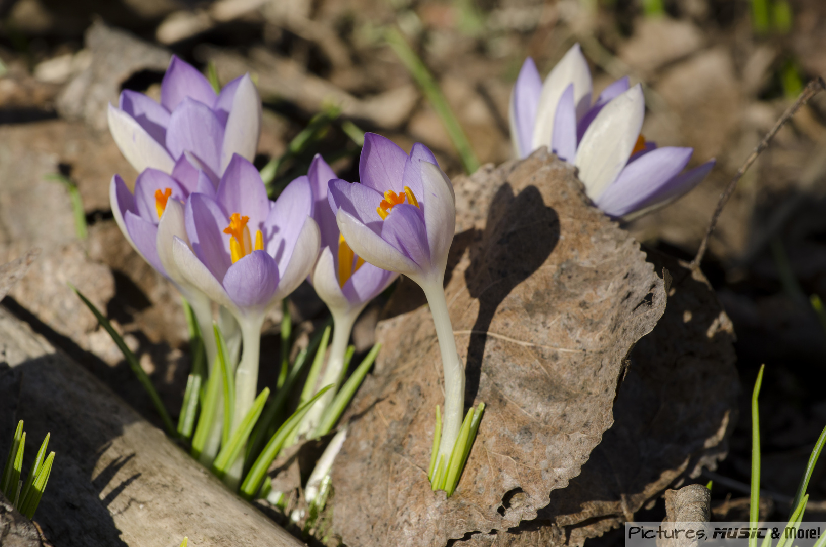 Frühlingserwachen :-)
