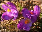Frühlingserwachen.....
