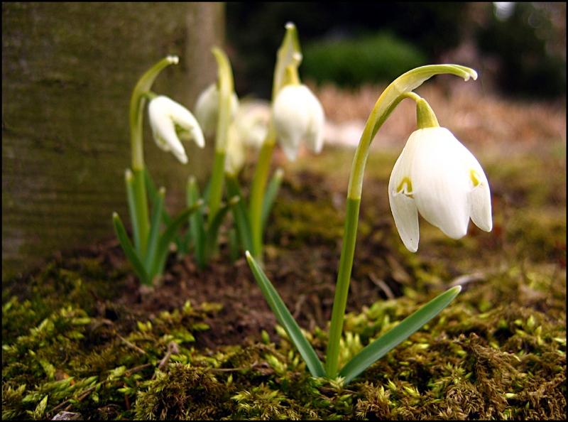 Frühlingserwachen!