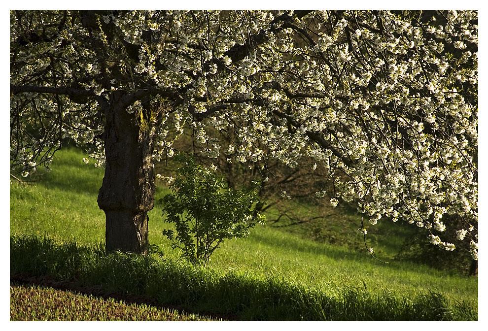 Frühlingserwachen II