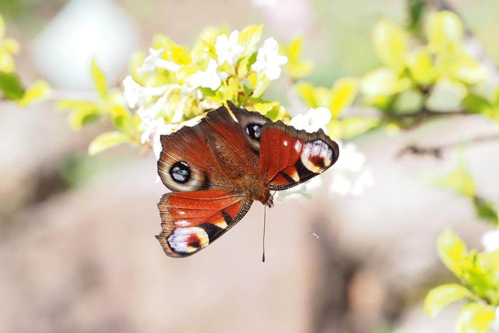 Frühlingserwachen im Botanischen Garten Wien