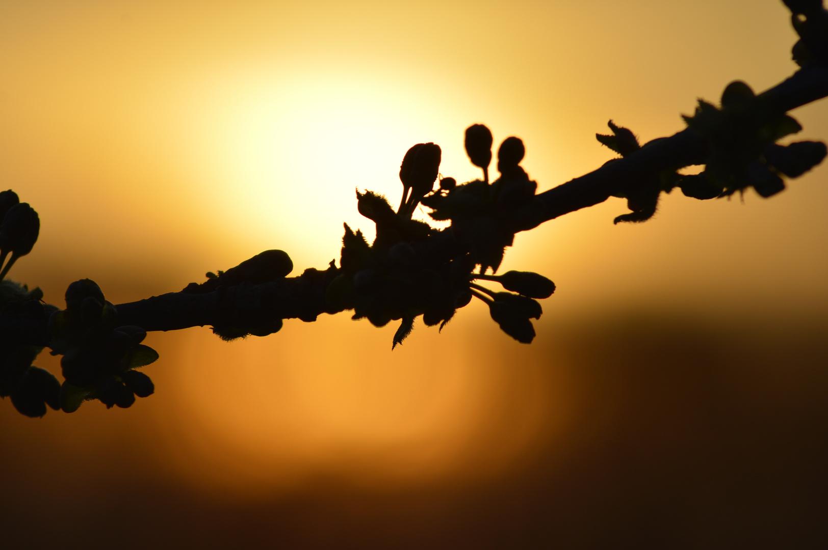 Frühlingserwachen im Sonnenuntergang