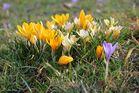 Frühlingserwachen im Wörlitzer Park