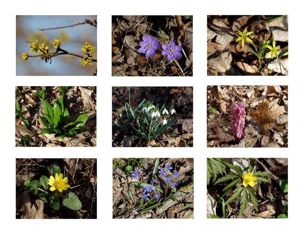 ...Frühlingserwachen in den Auen (2)....